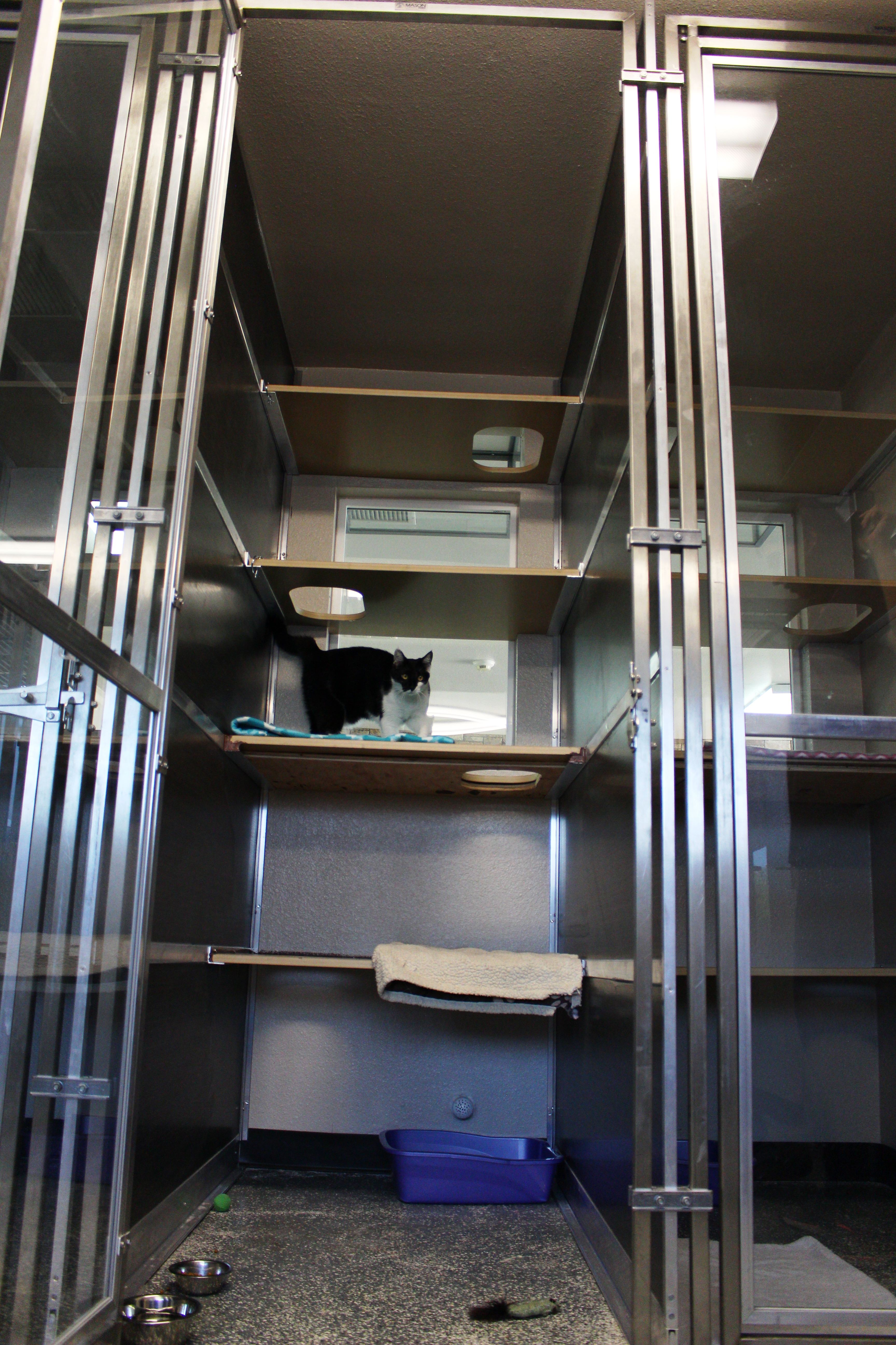 Our new suites are super spacious so that your furry kitty has plenty of room while they vacation with us in our kitty condos.