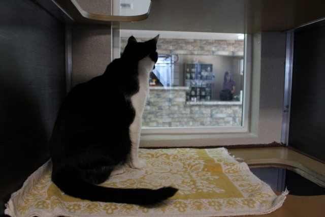 Our new luxury cat suites offer a view to the lobby, that way your kitty can always keep an eye on all the action.