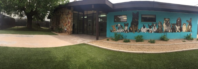 When you drive by you can see some of our beautiful murals on the outside of the building. We have one in our cat hotel.