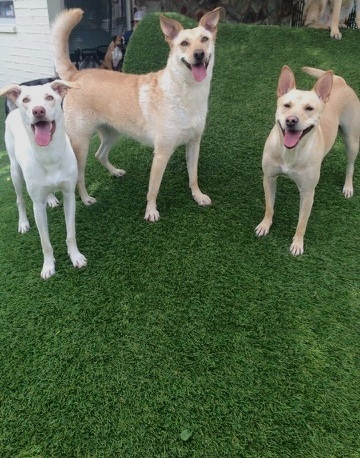 Sun Devil Animal Hospital & Pet Resort has a wonderful doggie day camp Monday through Friday to tire your furry friend out while you are at work.