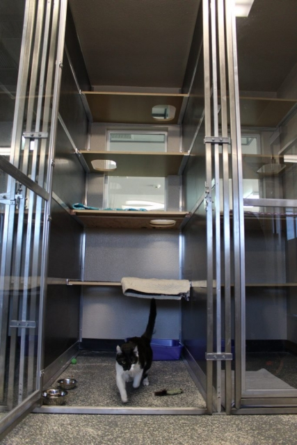 If your cat likes to explore than we have the perfect place for them to stay while you're away.