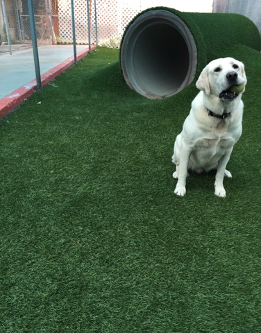 Do you want your pet to get out and run around in one of our play yards while they are boarding? We can add a playtime a day for just $5.00. Playtimes are 15 to 20 minutes of one on one attention with one of our kennel attendants. Additional pets during the same playtime are half price.